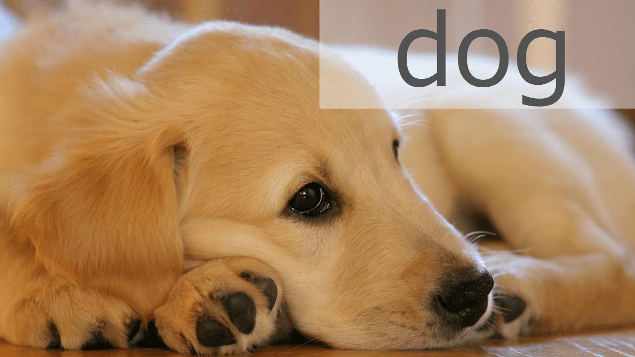 犬の飼い方・育て方