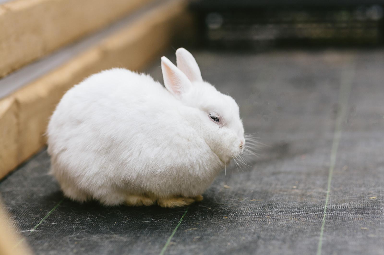 うさぎの飼い方・飼育法|初心者が知っておくべきこと