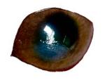 うさぎの角膜炎