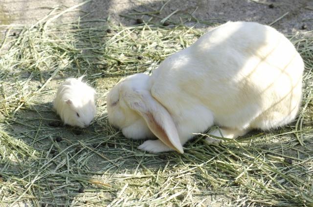 【タイプ別】うさぎが食べやすい、散らかさない牧草入れは