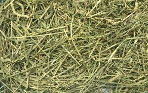 うさぎの牧草