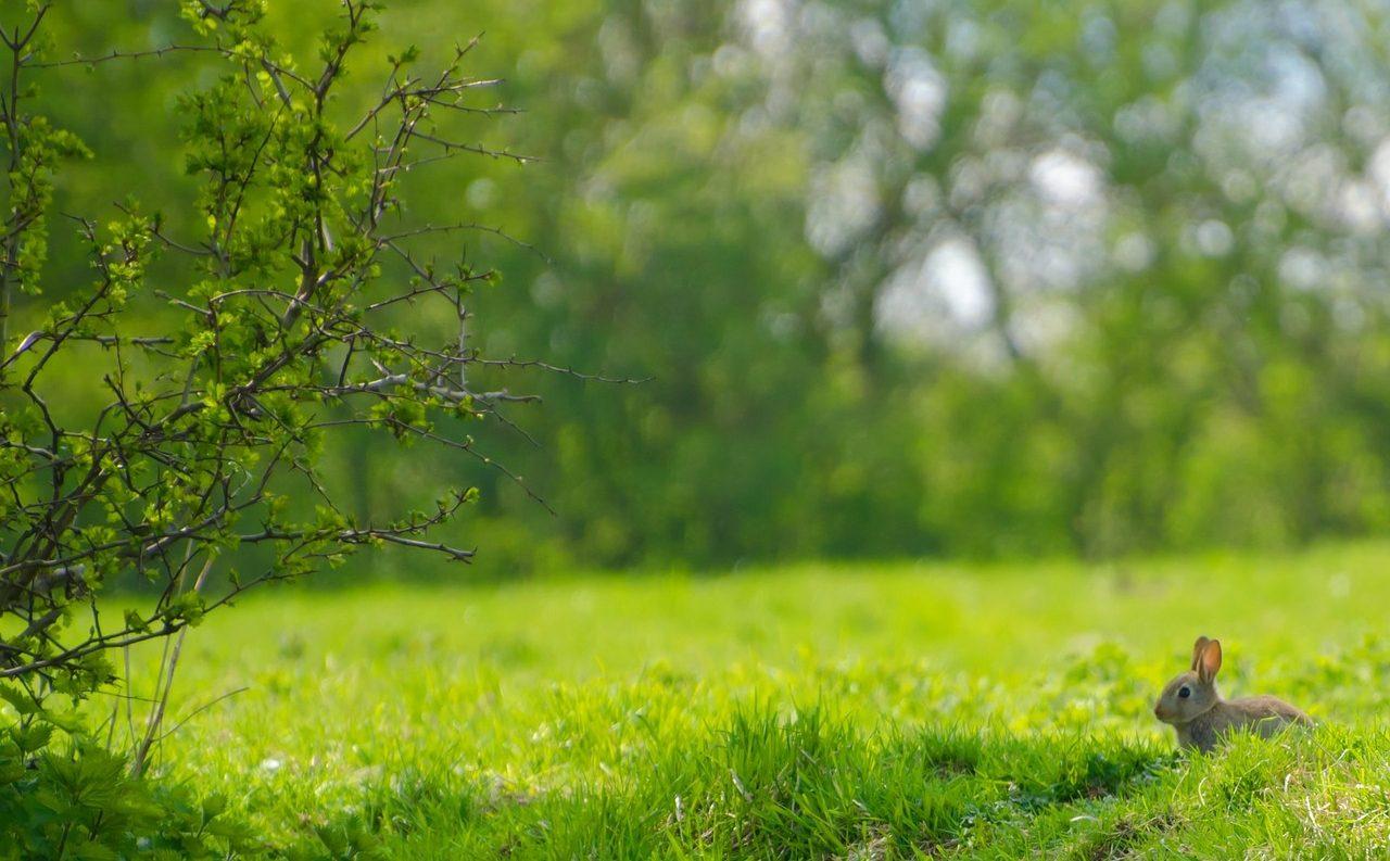 【うさぎの牧草】悩みに合わせたおすすめ種類|一日の量や保存方法も