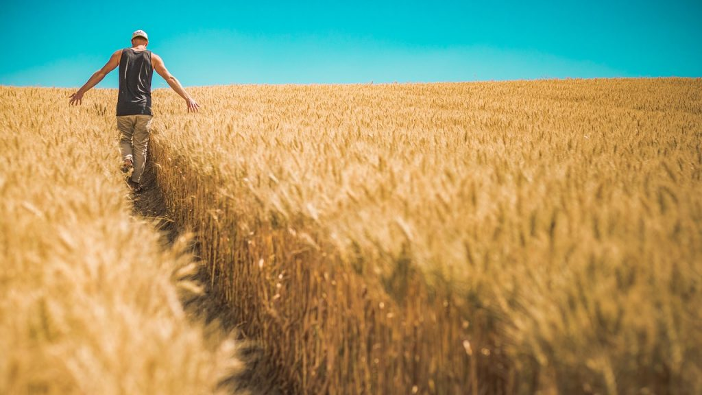 牧草を選別する人