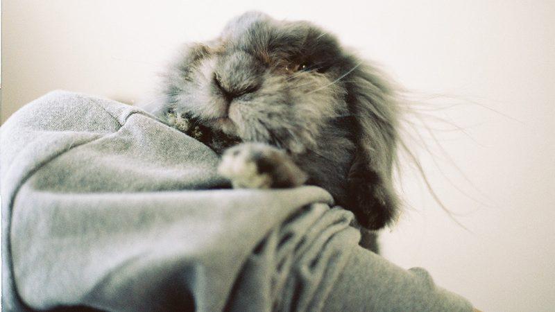 抱っこされて幸せそうなうさぎ