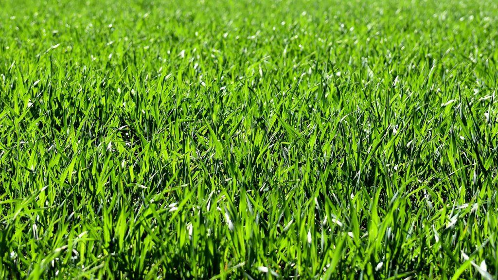 生い茂った牧草