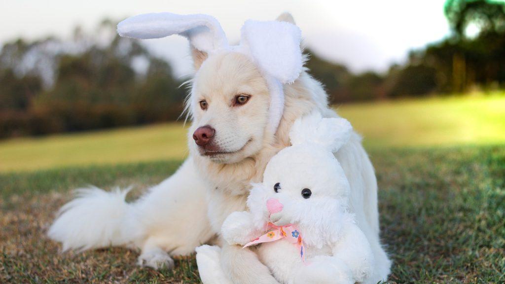 うさぎになりたい犬