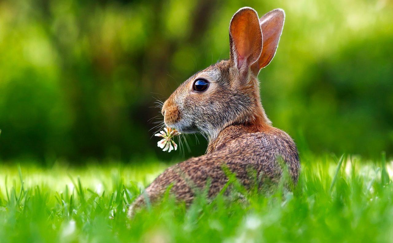 うさぎが食べられる野草、ダメな雑草|勝手に食べてしまったら