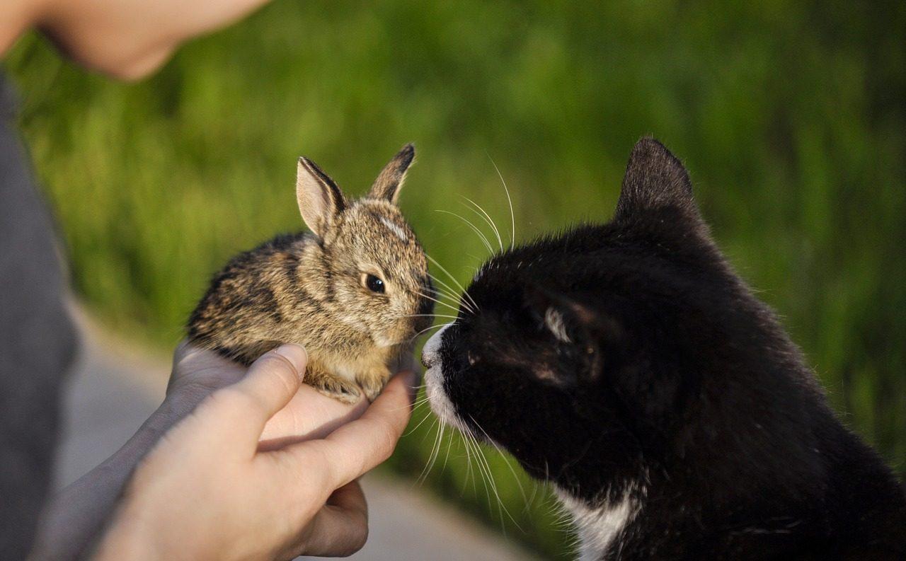 うさぎと犬・猫・他のペットは同居できるの?相性や同居方法