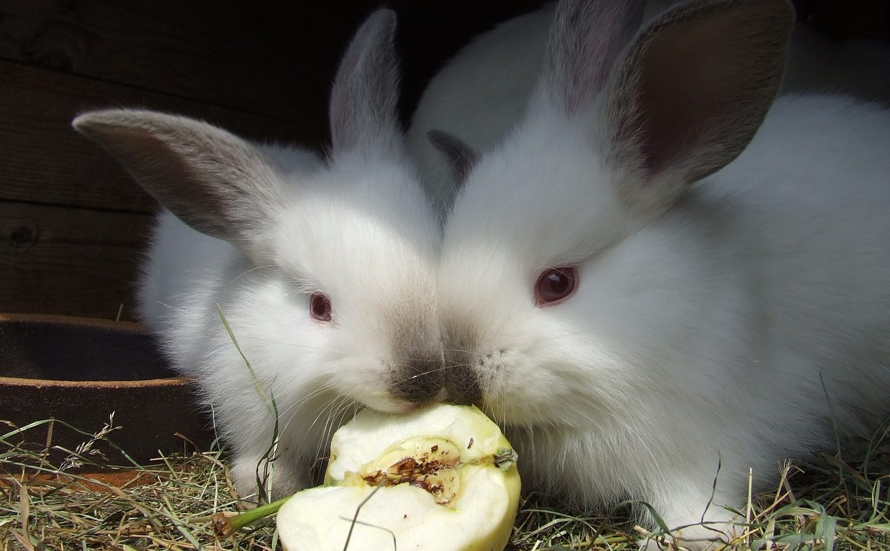 うさぎに与えて良い果物、ダメな果物|適量やタイミング付き