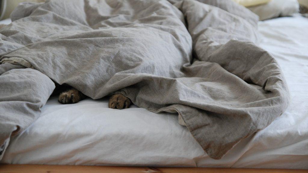 毛布に包まれるペット