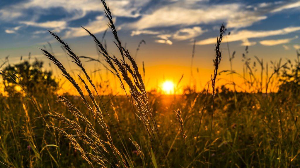 夕方の牧草地たい