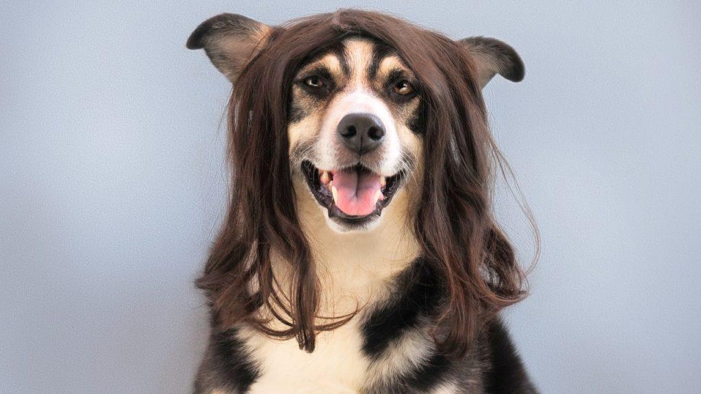 毛の伸びた犬