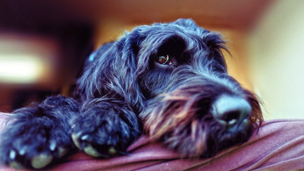 綺麗にカットされた犬