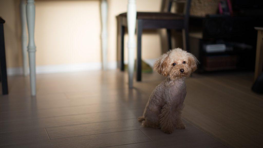 自宅がサロンの犬