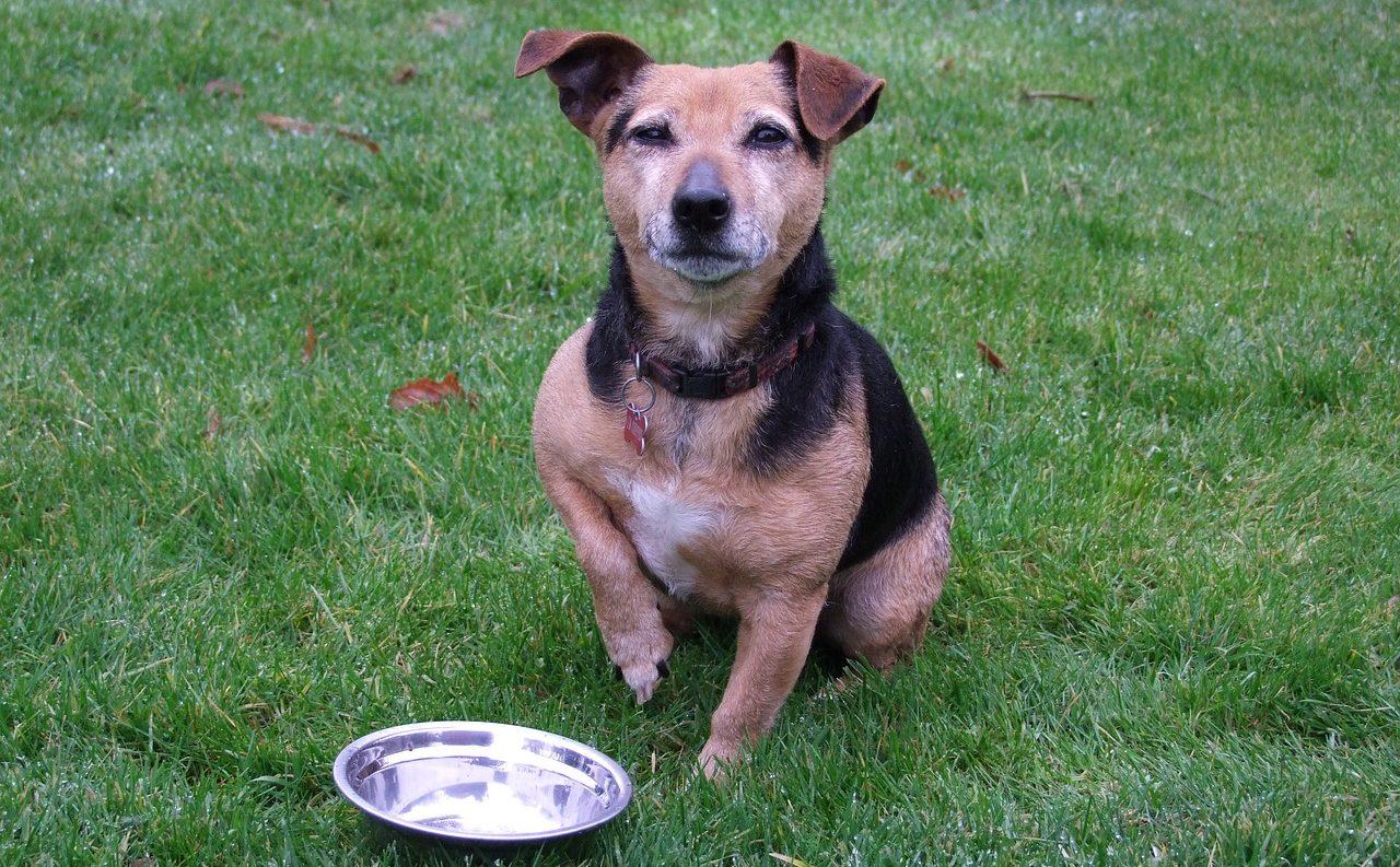 犬のドッグフード丸呑み・早食は危険?餌をゆっくり食べさせるには