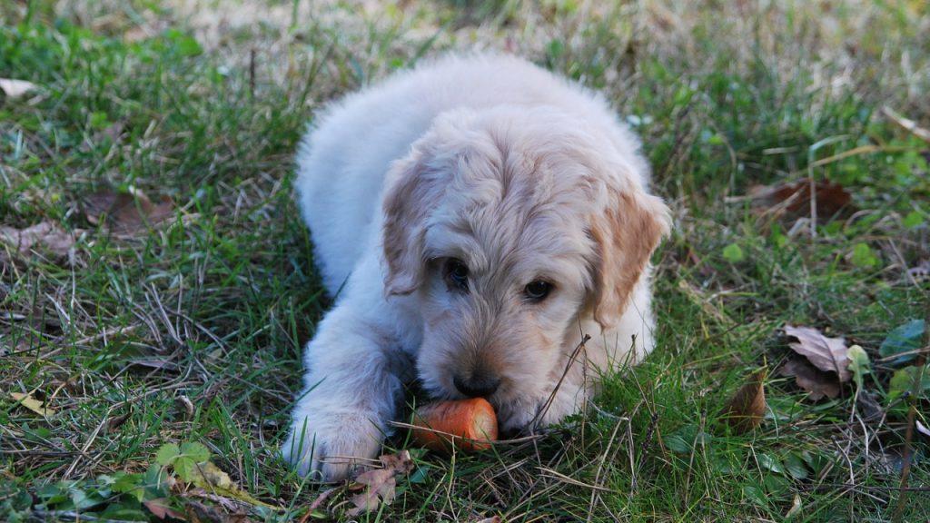 餌を鼻で押す犬