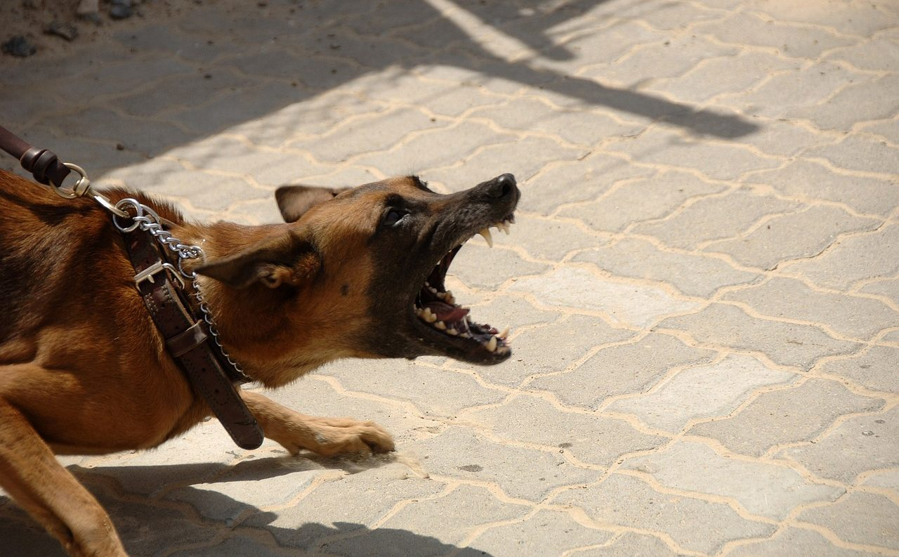 犬がご飯の準備中に吠える原因と対処法5つ【催促に従ってはダメ】