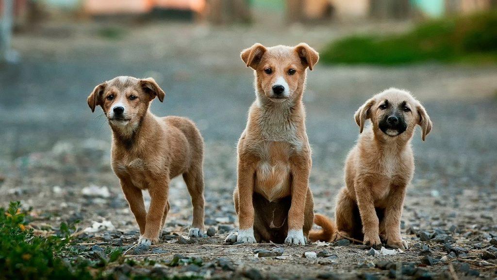 いろんな世代の犬