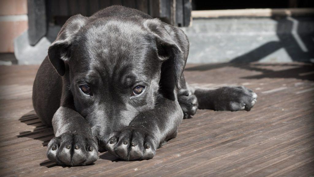 落ち込む犬